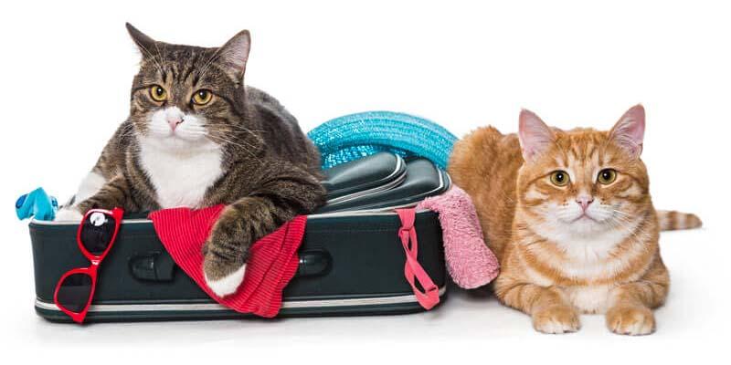 gatto in viaggio-7-800x400