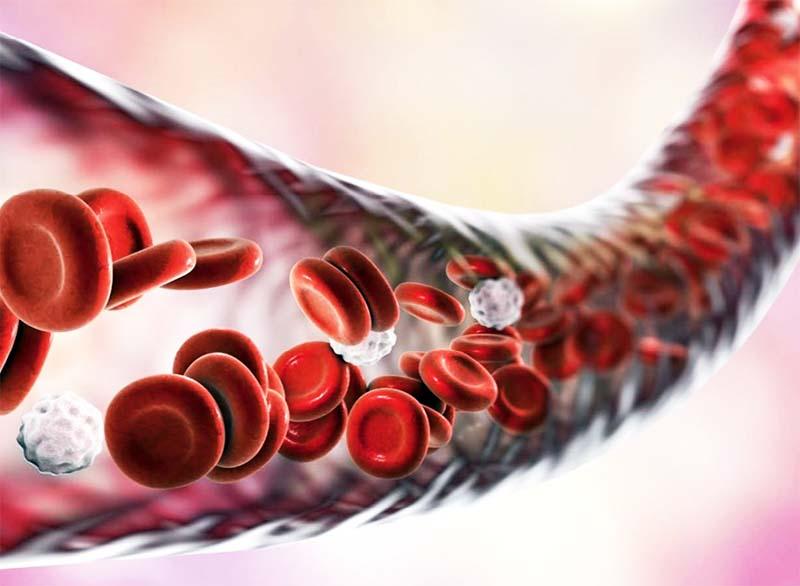 mangiacolesterolo