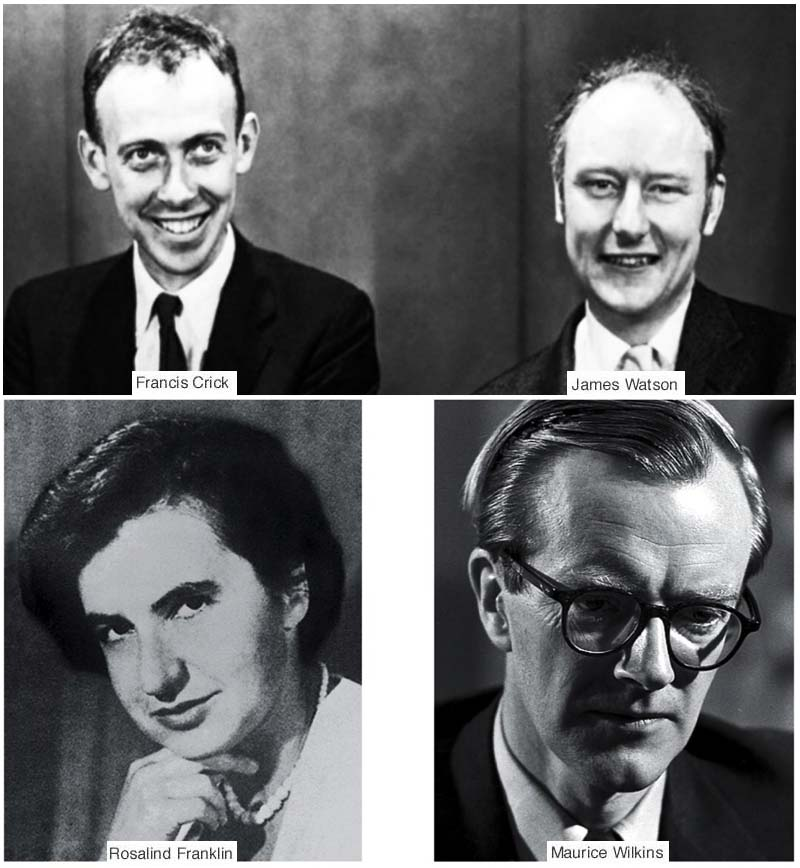 James Watson e Francis Crick-800x400