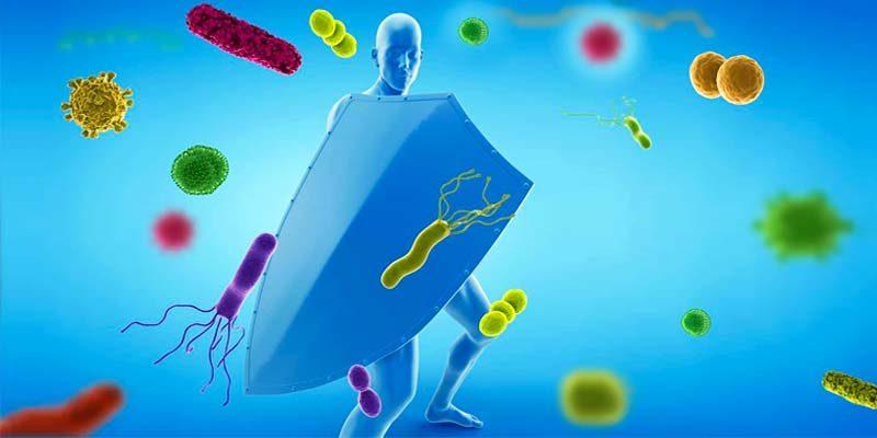 Come funziona il sistema immunitario-1-800x400