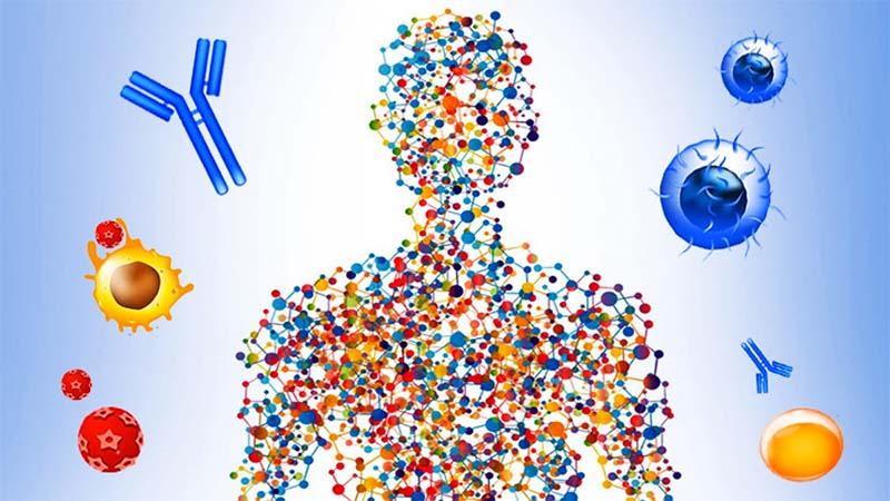 Come funziona il sistema immunitario-3-800x400