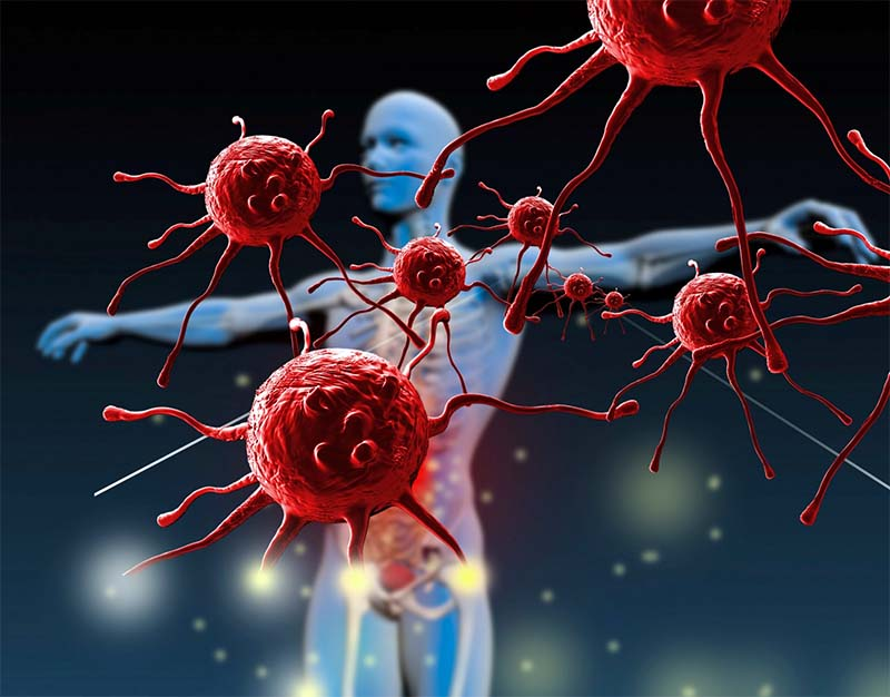 Come funziona il sistema immunitario-4-800x400
