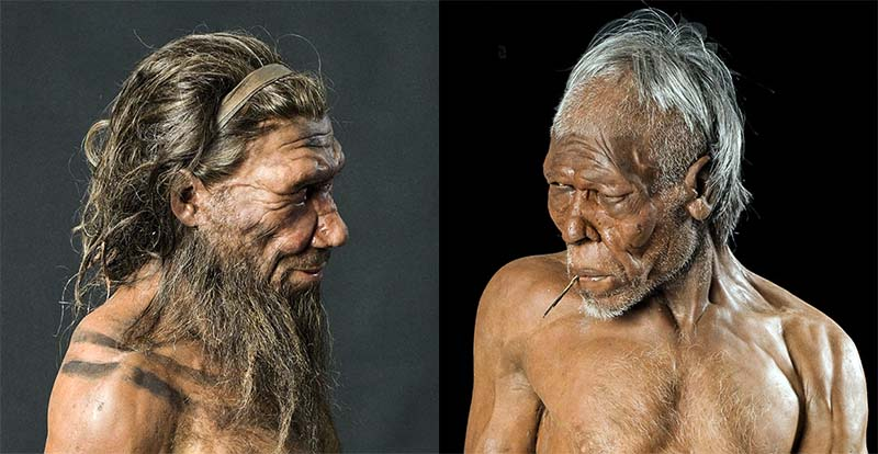 crani Neandertal-10-800x400