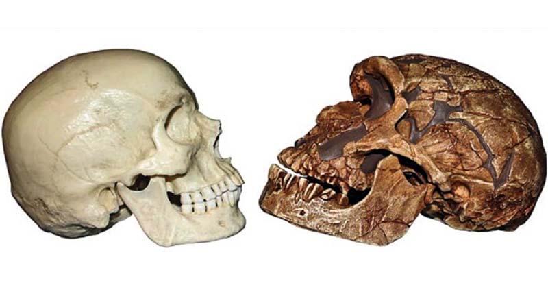 crani Neandertal-8-800x400