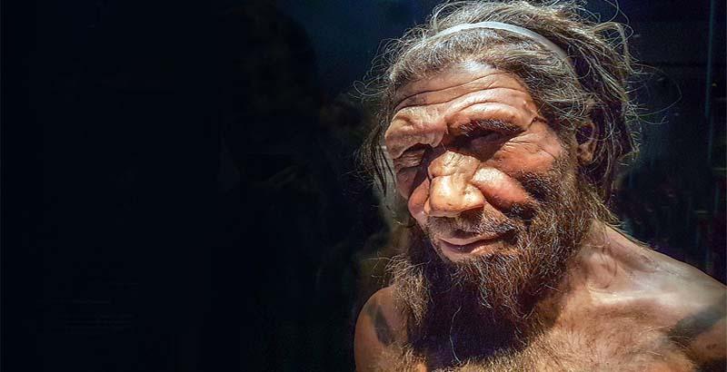 crani Neandertal-9-800x400