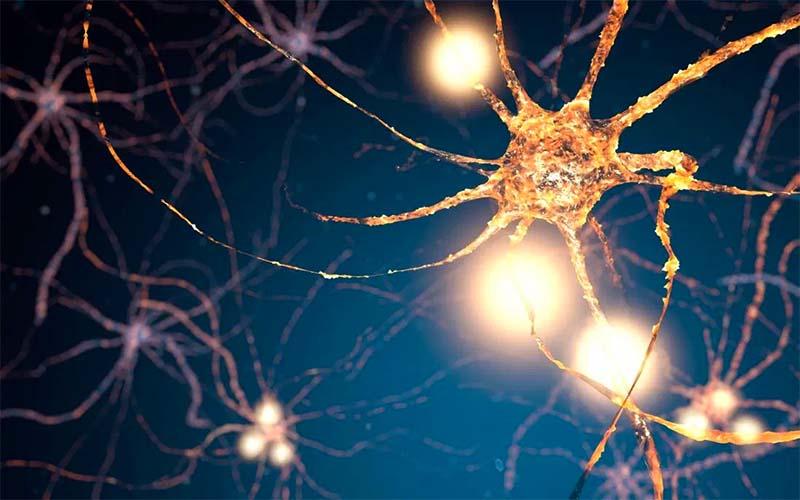 rigenerare il cervello-3-800x400