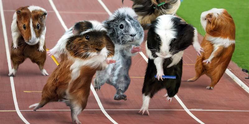 Le olimpiadi degli animali-1-800x400