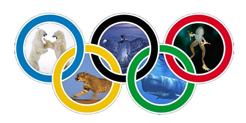 Le olimpiadi degli animali-2-800x400