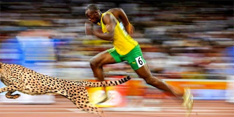 Le olimpiadi degli animali-3-800x400