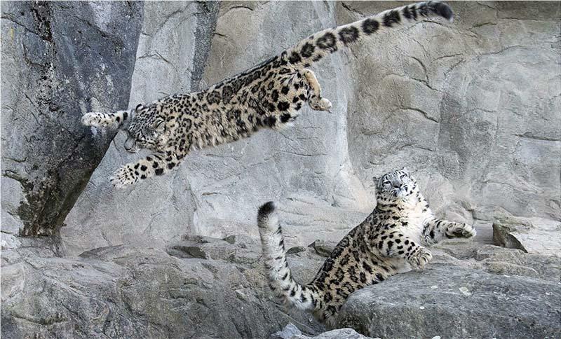 Le olimpiadi degli animali-6-800x400