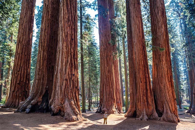 Sequoie-9-800x400