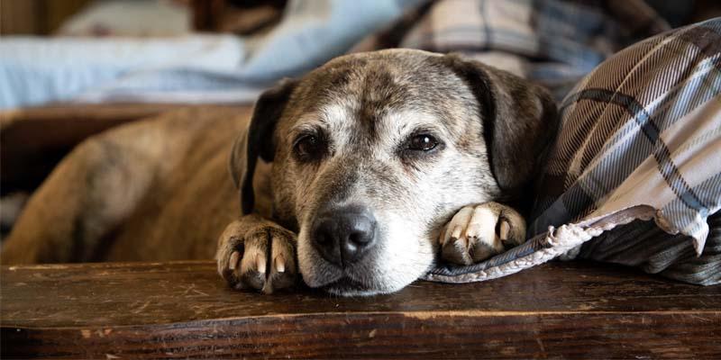 cane anziano-11-800x400