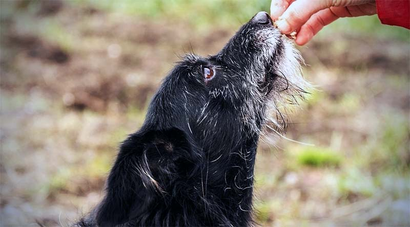 cane anziano-12-800x400