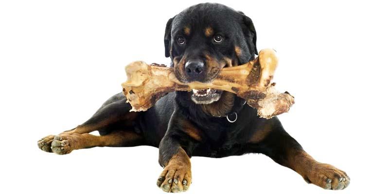 cane grande-14-800x400