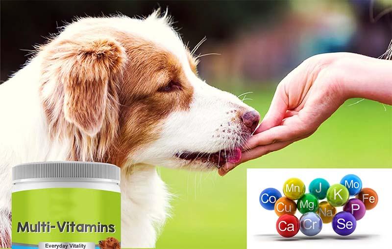 cane vitamine-24-800x400