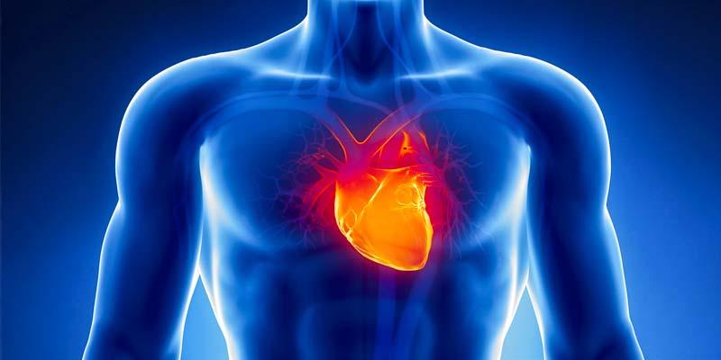 Il cuore-1-800x400