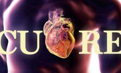 Il cuore-2-800x400