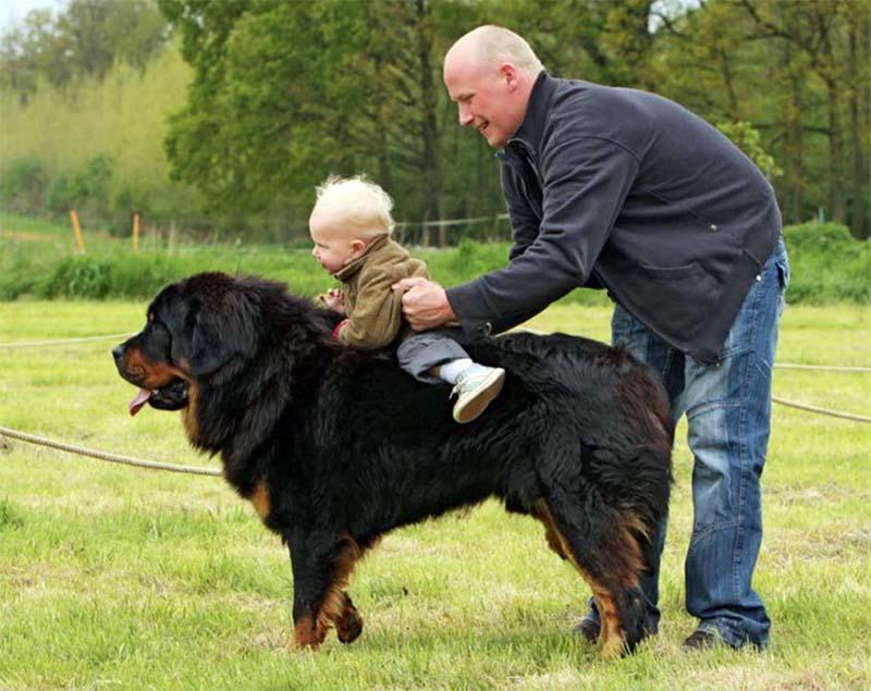 cani e bambini-10-800x400
