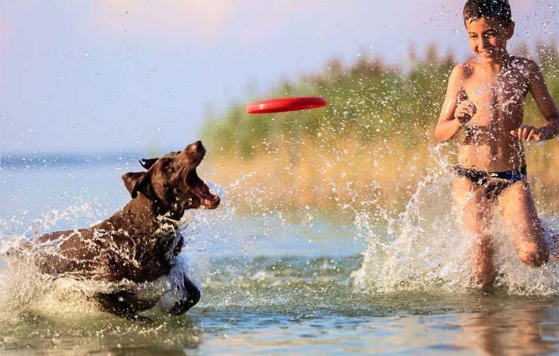 cani e bambini-11-800x400