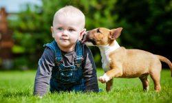 cani e bambini-12-800x400