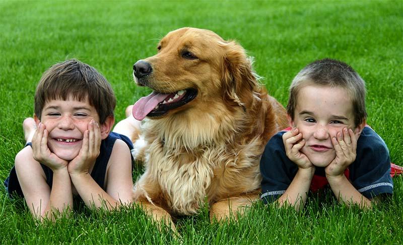 cani e bambini-3-800x400