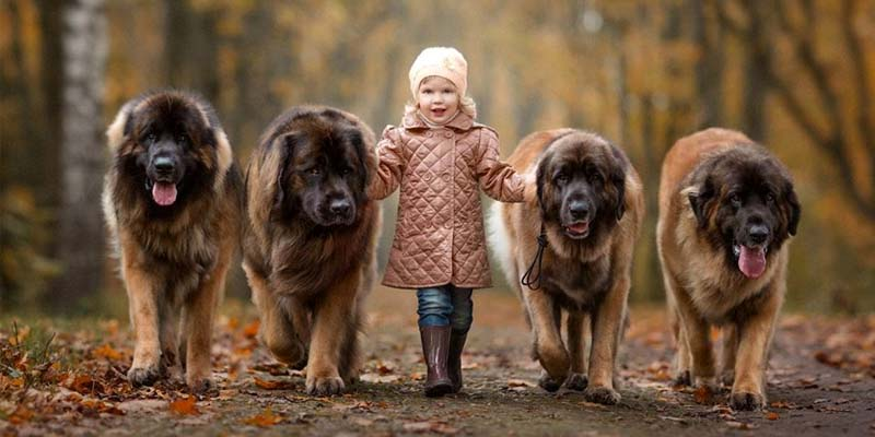 cani e bambini-6-800x400