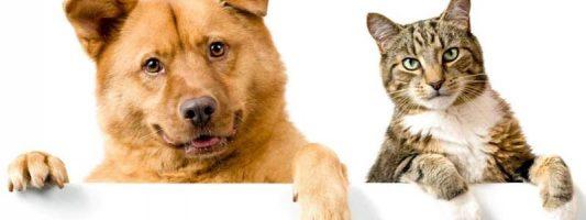 cani e gatti-1-800x400
