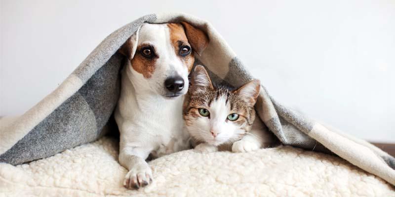 cani e gatti-2-800x400