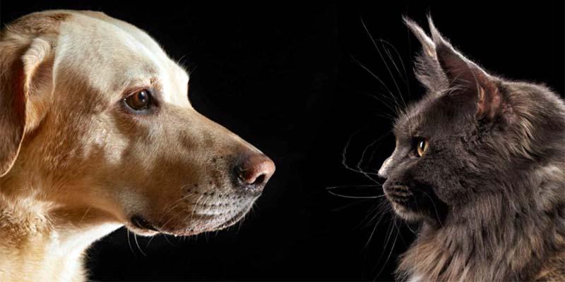 cani e gatti-3-800x400