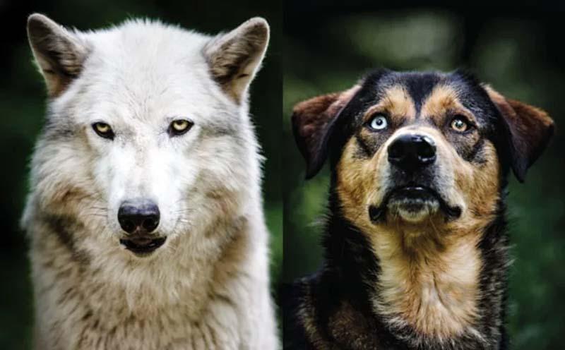 cani e gatti-4-800x400