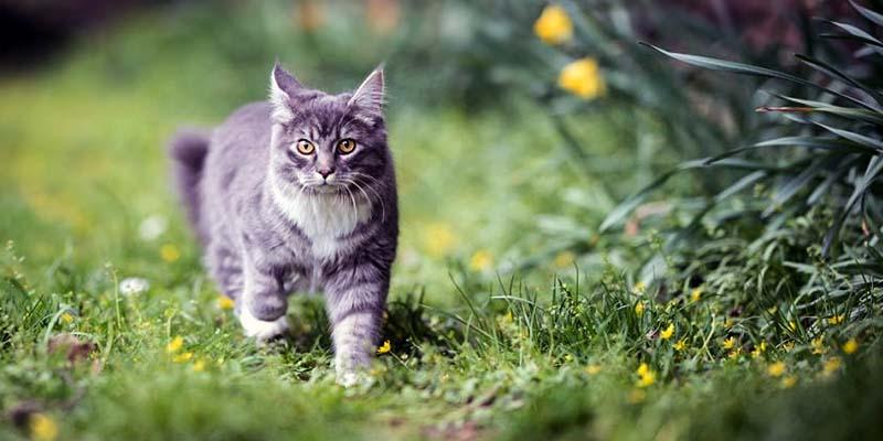 il gatto e le fughe-3-800x400