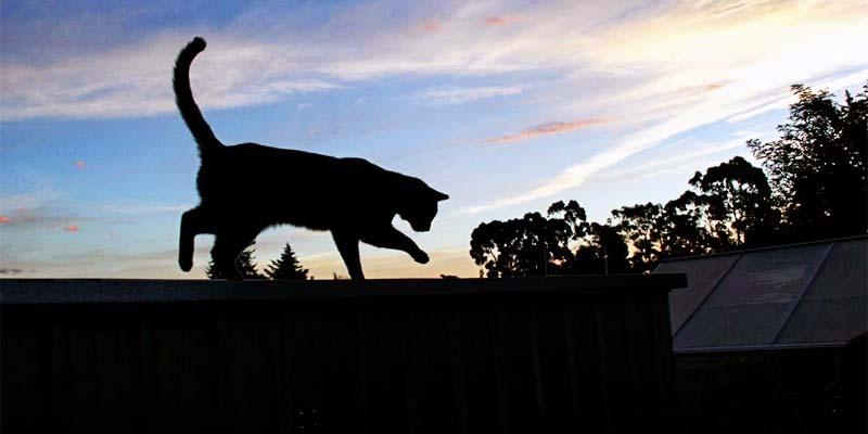 il gatto e le fughe-7-800x400