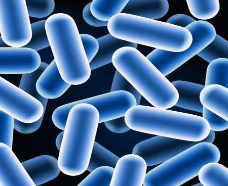 lattobacilli probiotici