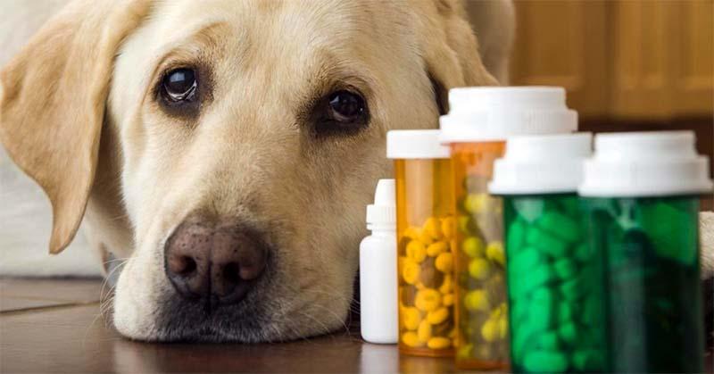 Prendiamo troppi antibiotici-7-800x400