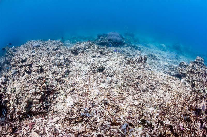 acidificazione oceani2-800x400