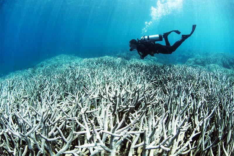 barriera corallina-800x400