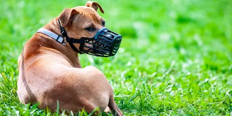 cane con museruola-1-800x400