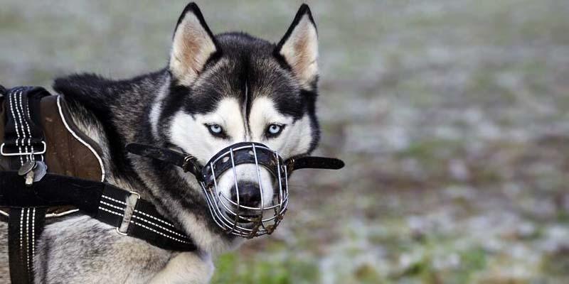 cane con museruola-2-800x400