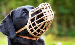 cane con museruola-6-800x400