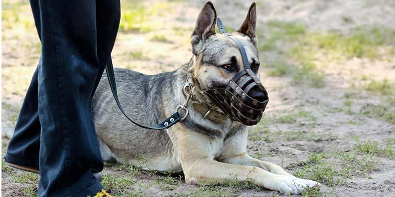cane con museruola-8-800x400