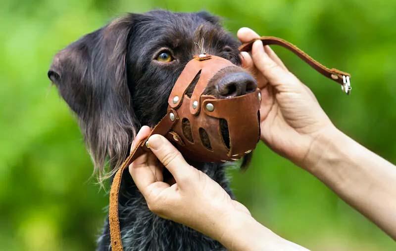 cane con museruola-9-800x400