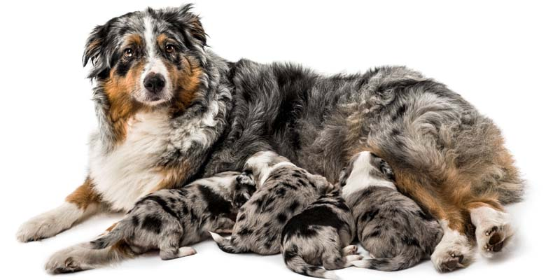 cane, parto e cure-1-800x400