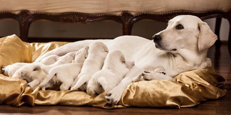 cane, parto e cure-11-800x400