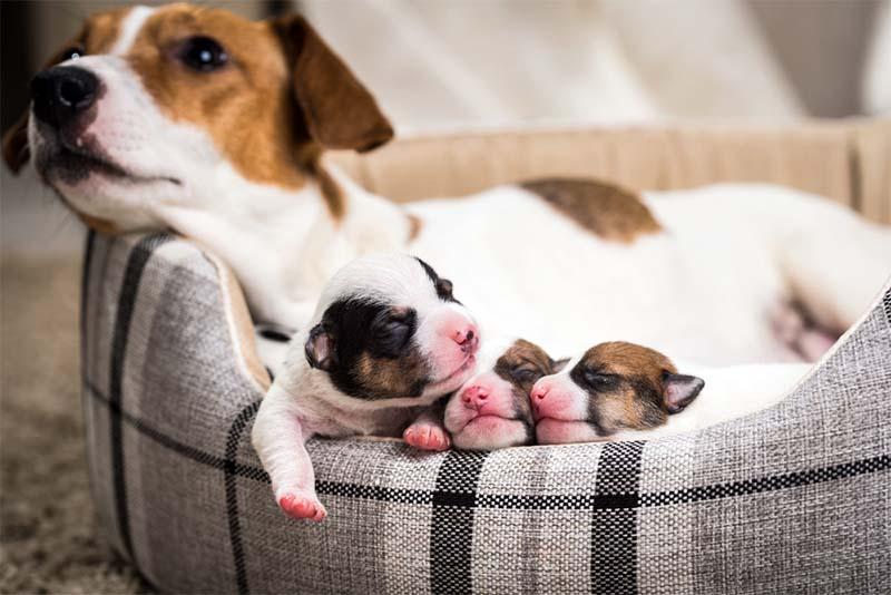 cane, parto e cure-13-800x400