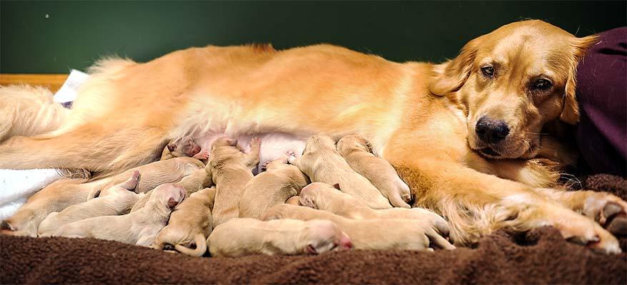 cane, parto e cure-2-800x400