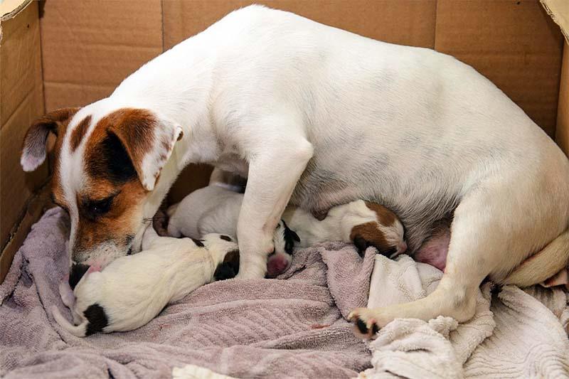 cane, parto e cure-6-800x400