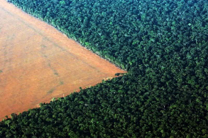 deforestazione-800x400