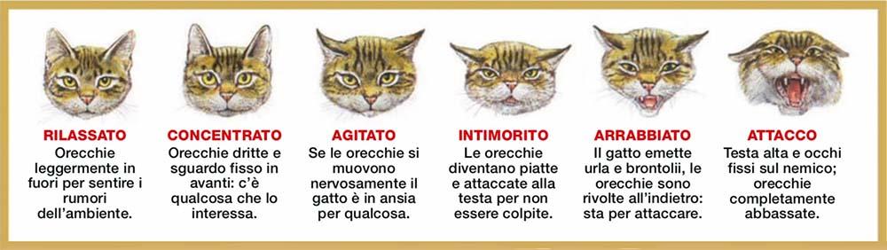 espressioni del gatto