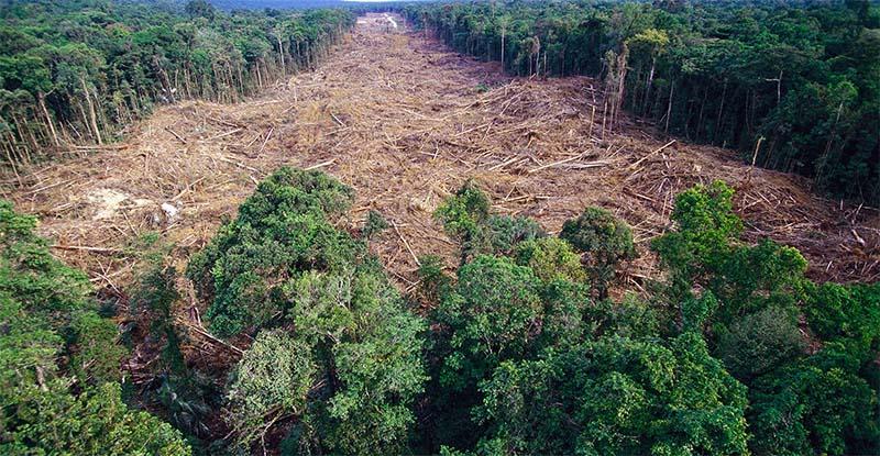deforestazione-8-800x400