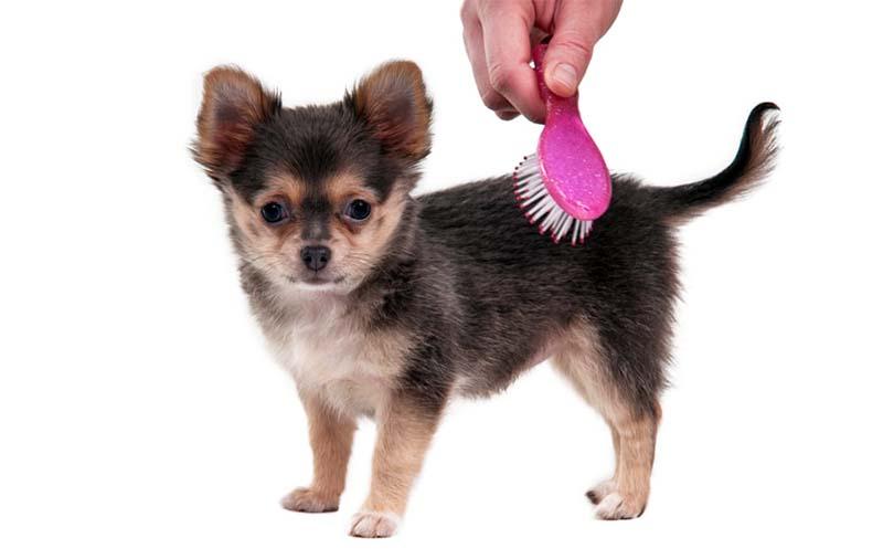 spazzolare il cane-10-800x400